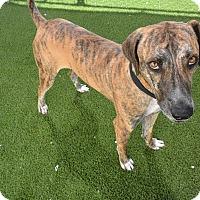 Adopt A Pet :: Tigger - Meridian, ID