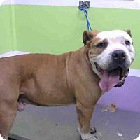 Adopt A Pet :: APOLLO - Houston, TX