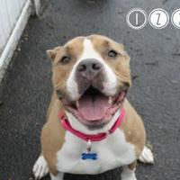 Adopt A Pet :: Izzy - West Des Moines, IA