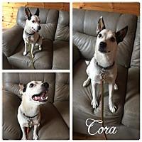 Adopt A Pet :: Cora - Hope, BC