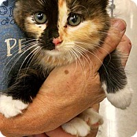 Adopt A Pet :: Baby Meow - Cherry Valley, CA