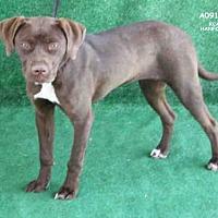 Adopt A Pet :: SKY - Hanford, CA