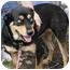 Photo 3 - Rottweiler/Husky Mix Dog for adoption in Ypsilanti, Michigan - Mandy