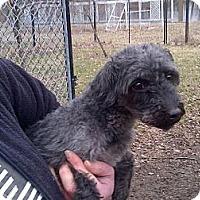 Adopt A Pet :: Milton - Antioch, IL