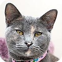 Adopt A Pet :: TWILL - Grand Rapids, MI