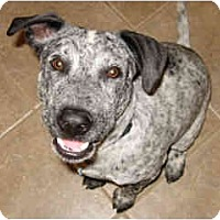 Adopt A Pet :: Sparky- Courtesy post - Scottsdale, AZ