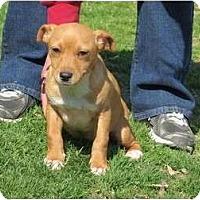Adopt A Pet :: Vega - Westbrook, CT