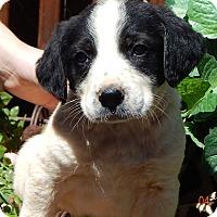 Adopt A Pet :: Duke (6 lb) - SUSSEX, NJ