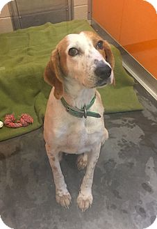Hound (Unknown Type) Mix Dog for adoption in Wilmington, Delaware - Grace