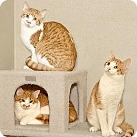 Adopt A Pet :: Larry - Cashiers, NC
