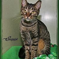 Adopt A Pet :: Sammi - Shippenville, PA