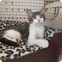 Adopt A Pet :: Binx - La puente, CA