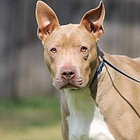 Adopt A Pet :: Flora - Valley Stream, NY