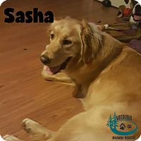 Adopt A Pet :: Sasha - Lots of Energy! - Huntsville, ON
