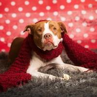 Adopt A Pet :: Stassi - Aberdeen, SD