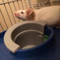 Adopt A Pet :: Lucinda - Edmonton, AB