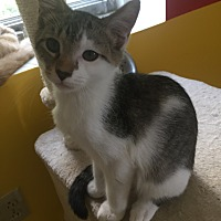 Adopt A Pet :: FORREST! - Owenboro, KY