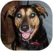 Manchester Terrier/Collie Mix Dog for adoption in Hamilton, Ontario - Precious