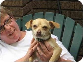 Chihuahua Mix Dog for adoption in Cincinnati, Ohio - 8 pound Stitch: UPDATE
