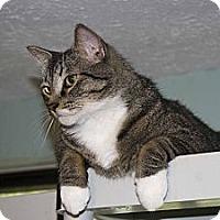 Adopt A Pet :: Dillon - New Port Richey, FL