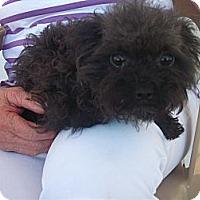 Adopt A Pet :: **OLIVIA** - Stockton, CA