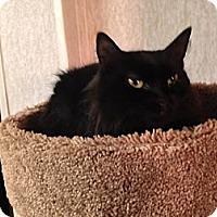 Adopt A Pet :: Trudi - Pace, FL