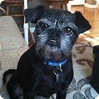 Adopt A Pet :: MICKERS - ADOPTION PENDING - Salem, OR