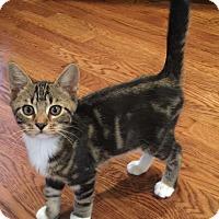 Adopt A Pet :: Tigger - Birmingham, AL