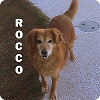 Adopt A Pet :: ROCCO - Higley, AZ