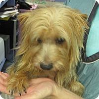 Adopt A Pet :: Andy - Conroe, TX