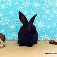 Other/Unknown for adoption in Scotts Valley, California - Clover