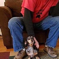 Adopt A Pet :: Bleu - Wilmington, DE