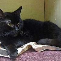 Adopt A Pet :: Maggie - Toledo, OH