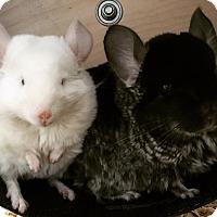 Adopt A Pet :: Claire & Winona - Granby, CT