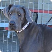 Adopt A Pet :: Candace - Prole, IA