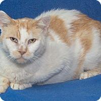 Adopt A Pet :: Vincent - Elmwood Park, NJ