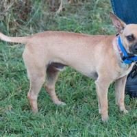 Adopt A Pet :: Rocky Road - Kennewick, WA