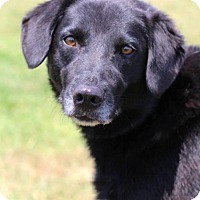 Adopt A Pet :: Lady Girl - Bedford, VA