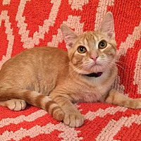 Adopt A Pet :: Guava - Addison, IL
