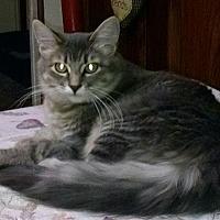 Adopt A Pet :: Willow - Saint Clair, MO