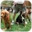 Photo 3 - Doberman Pinscher Mix Dog for adoption in Cincinnati, Ohio - Gil