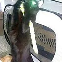 Adopt A Pet :: Emmie - Maryville, TN