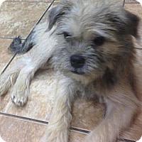 Adopt A Pet :: Ben - Lancaster, OH