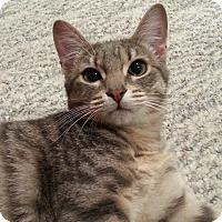 Adopt A Pet :: Wisteria - Portland, OR