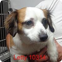 Adopt A Pet :: Letty - Greencastle, NC