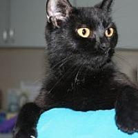 Adopt A Pet :: Savannah - Marietta, GA