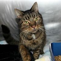 Adopt A Pet :: Sams - Hilton Head, SC