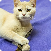 Adopt A Pet :: Freedom - Chicago, IL