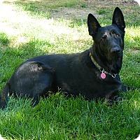 Adopt A Pet :: Milo - Rigaud, QC