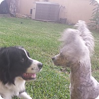 Adopt A Pet :: Angel - San Dimas, CA